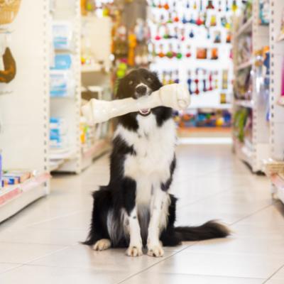 Como aumentar as vendas do seu pet shop? Veja 5 dicas importantes
